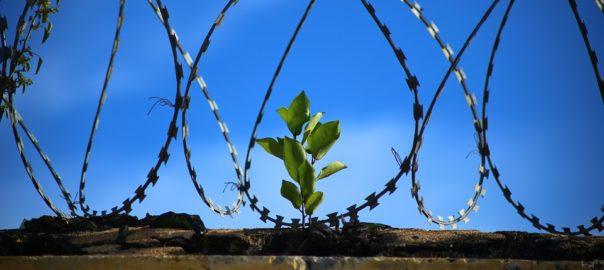 Prison Work Growth