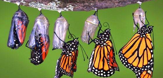 Buddha Butterfly