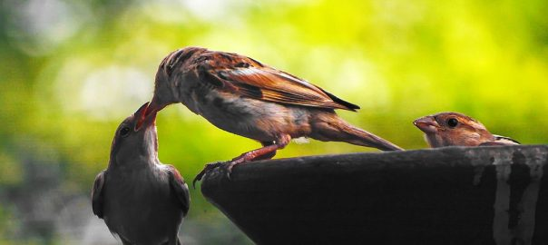 Caring Natures
